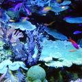 水族館で撮った写真
